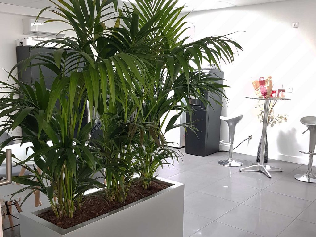 plantes intérieures pour bureaux sombres