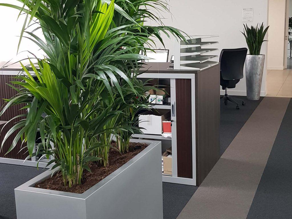 plantes intérieures pour bureaux open space