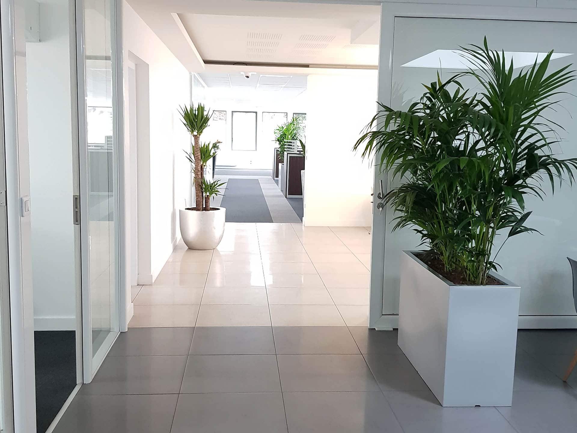 Plantes intérieures pour bureaux dans le cadre d une rénovation de
