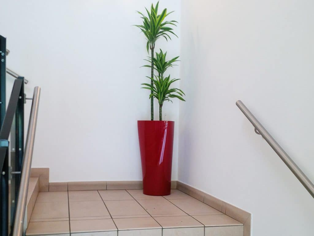 idée de pots originaux pour plantes