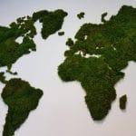 idée décoration végétal murale : mappemonde