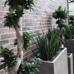 pots avec effets béton avec plantes vertes
