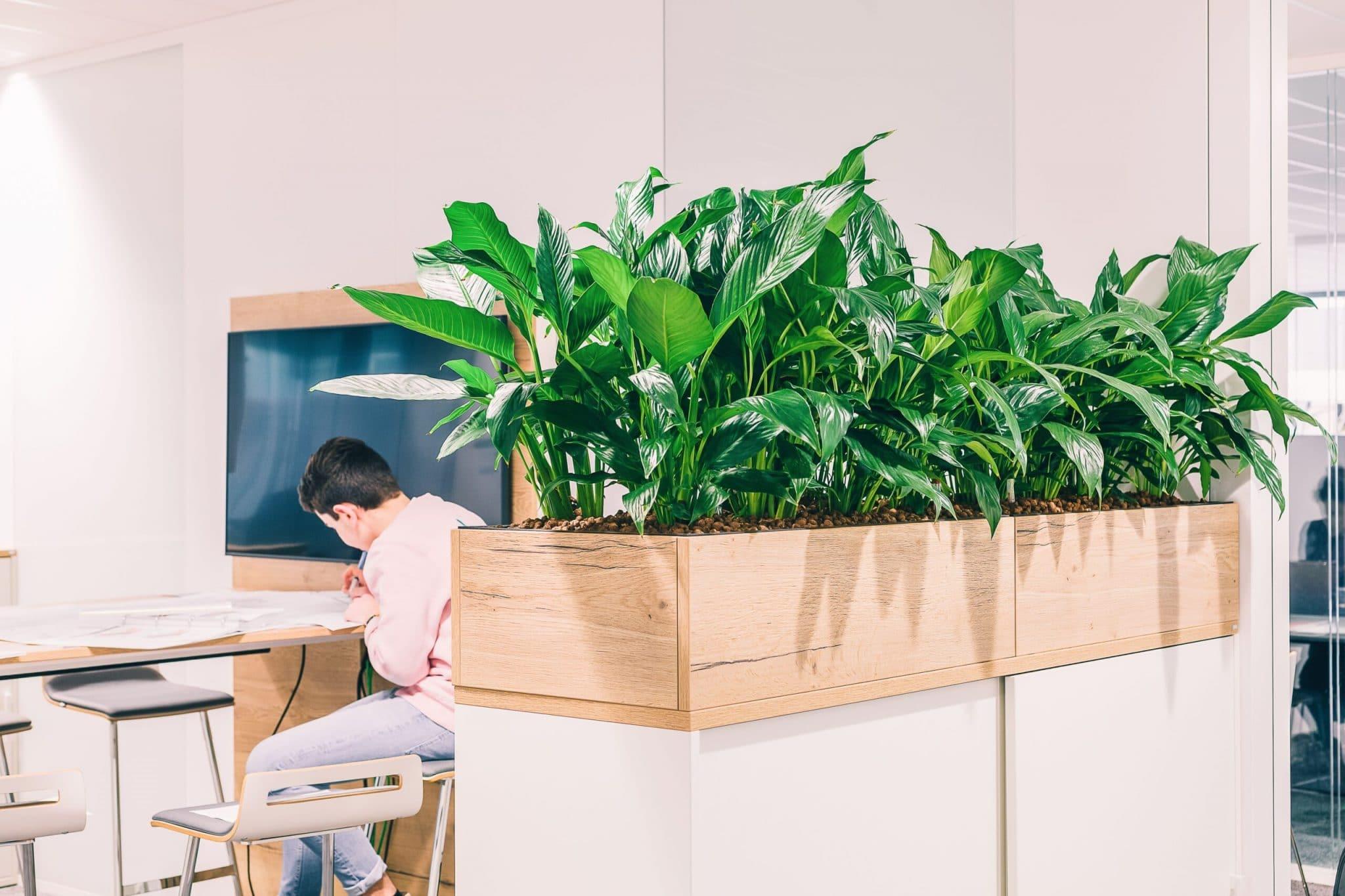 plantes verte bureau lyon