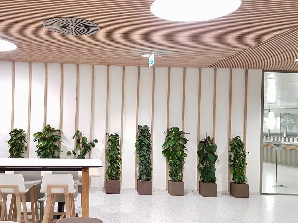 bureau design avec plantes vertes dans les espaces communs d'une entreprise