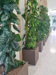 exemple de bureau design avec plantes vertes pour agrémenter couloir entreprise