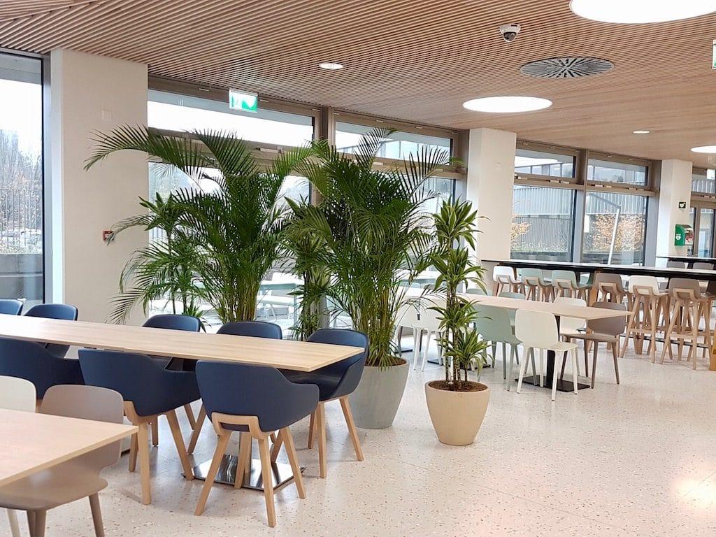 Exemple de bureau d'entreprise avec plantes vertes dans un réfectoire cafétériat