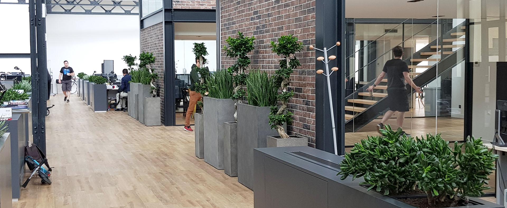 décor végétal dans une entreprise lyonnaise