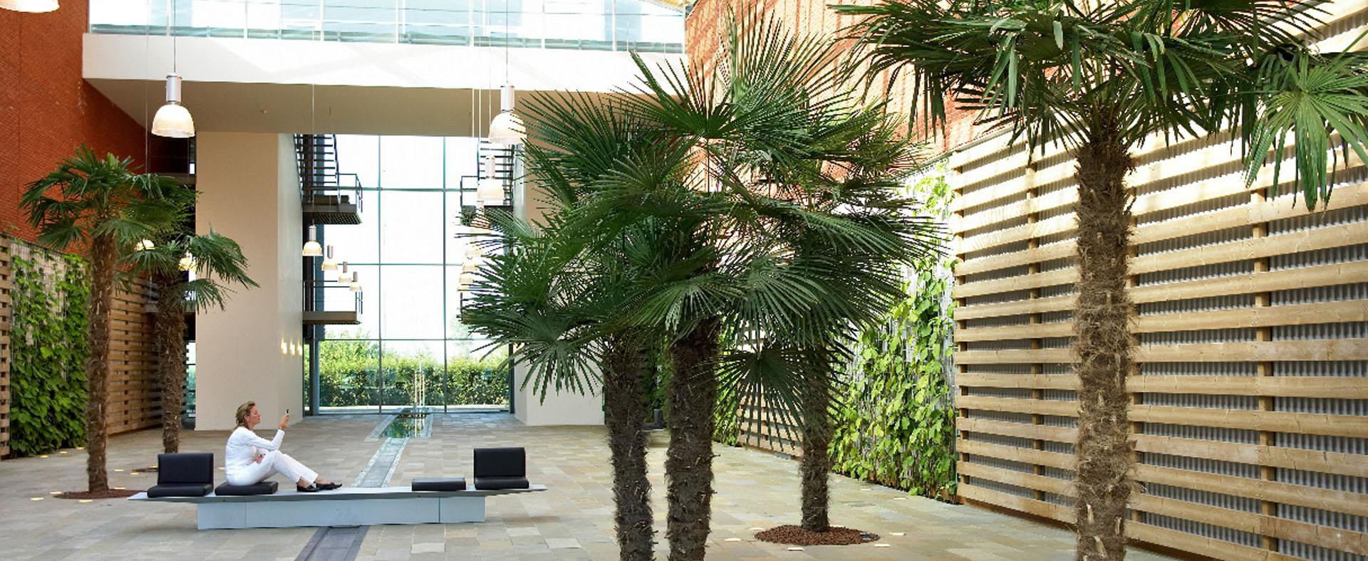palmier en intérieur espace végétal