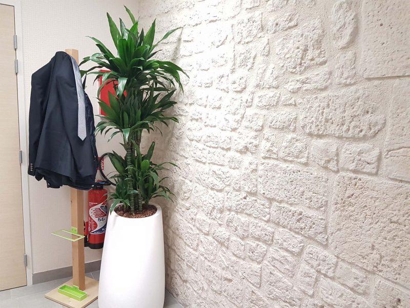 plantes vertes intérieur credit mutuelle