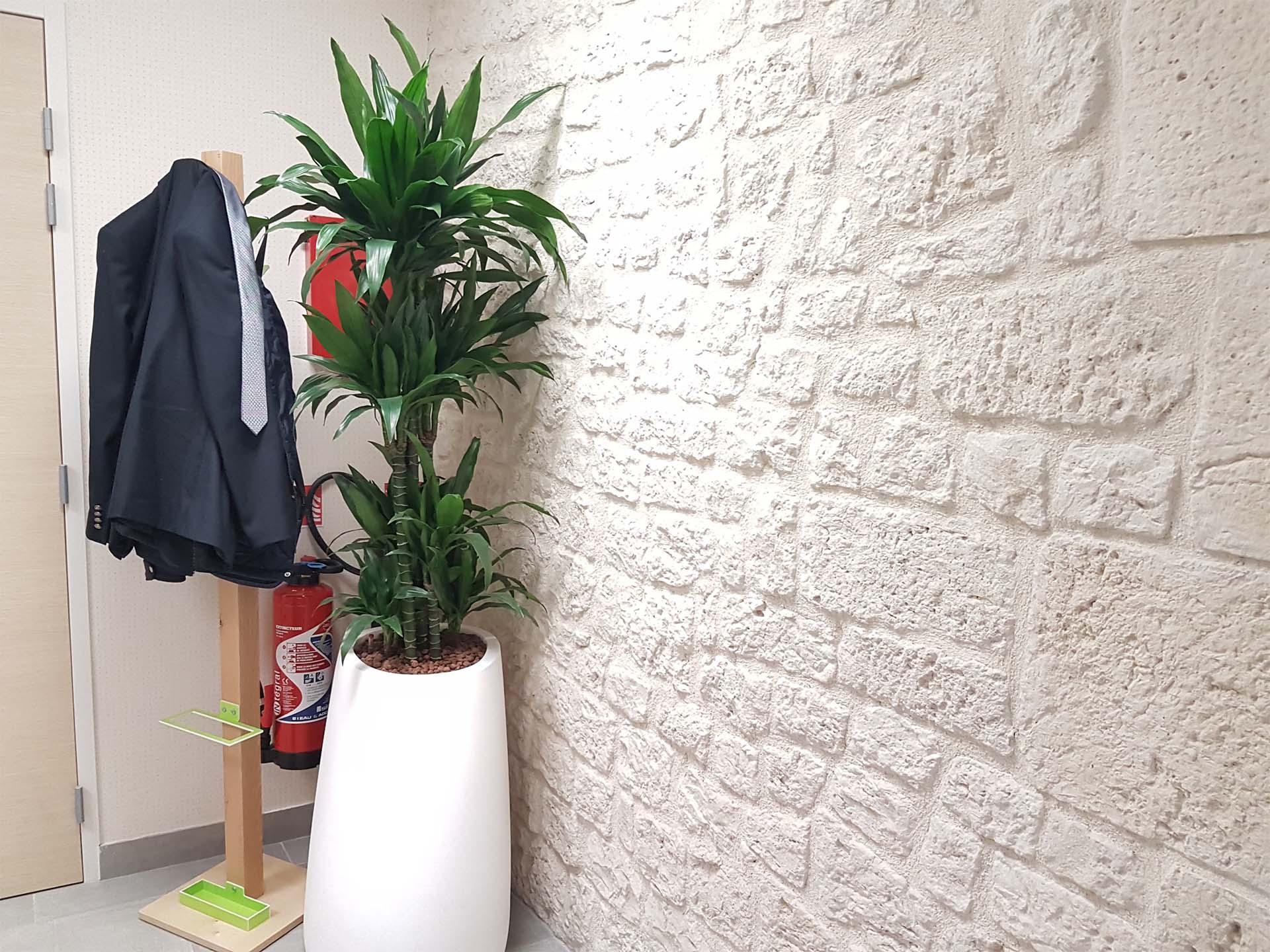 Plantes Pour Tableau Végétal Intérieur plantes vertes d'intérieur et tableau végétal pour aménager