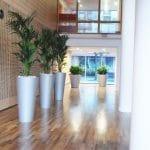 hall immeuble d'entreprise avec plantes vertes