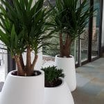 bac avec plantes semi naturelle