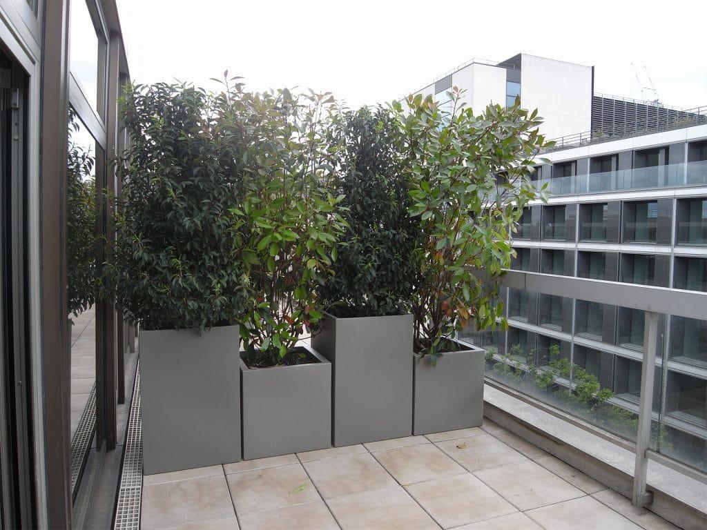 cloison grâce à des végétaux sur une terrasse