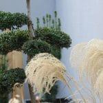 décor végétal extérieur sur mesure