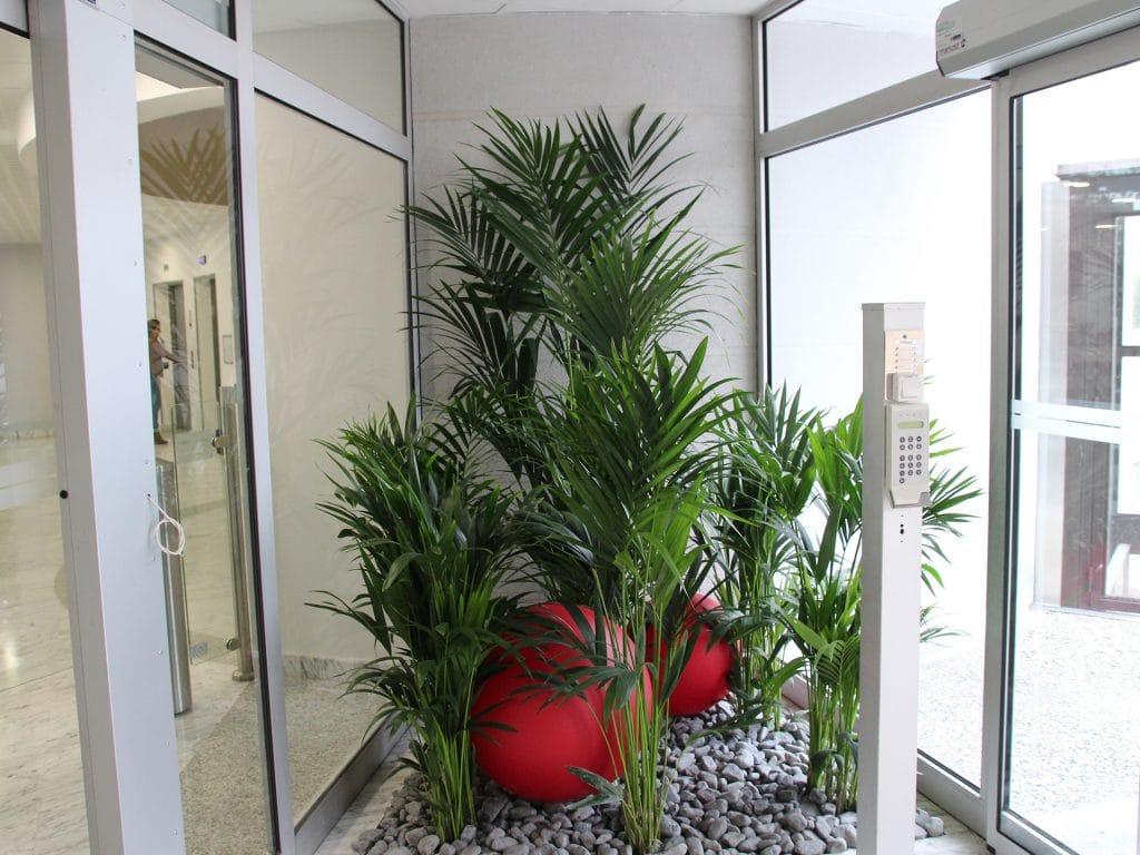 joli patio d'entreprise avec des plantes vertes