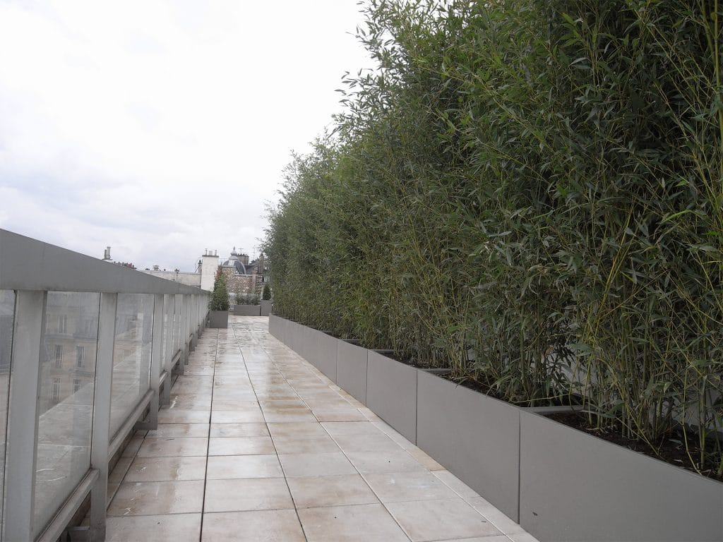 terrasse d'entreprise avec verdure imposante