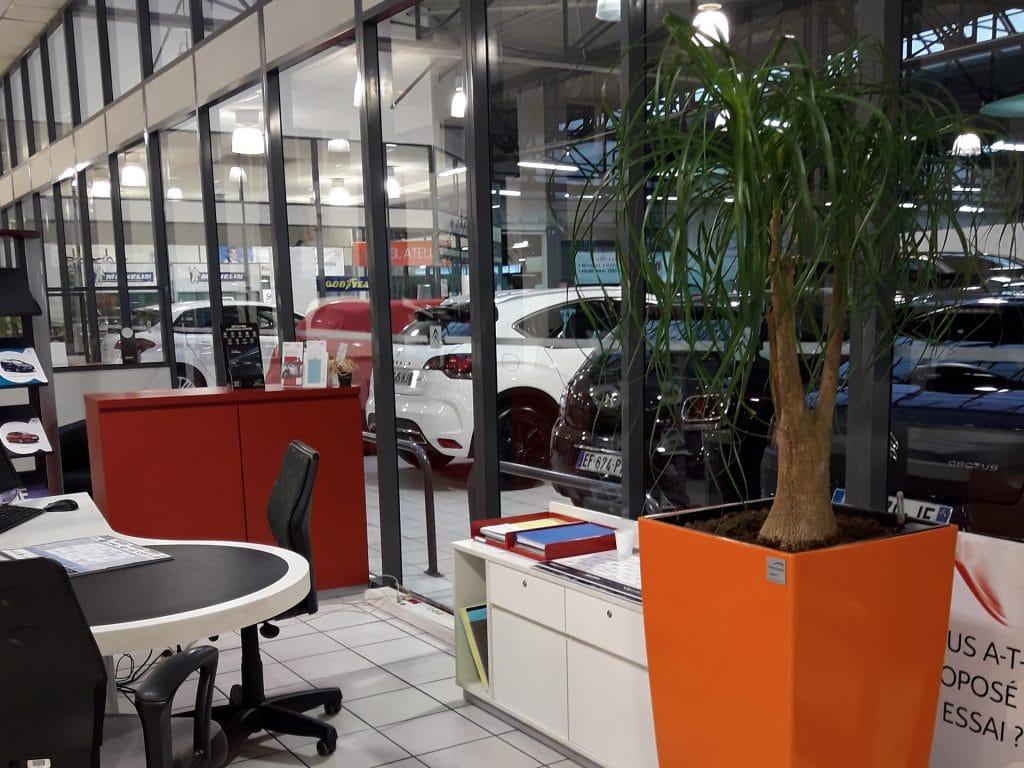 plantes dans concession voiture