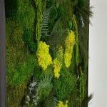 détails d'un mur végétal avec mousse