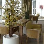 idée decoration végétale en maison de retraite