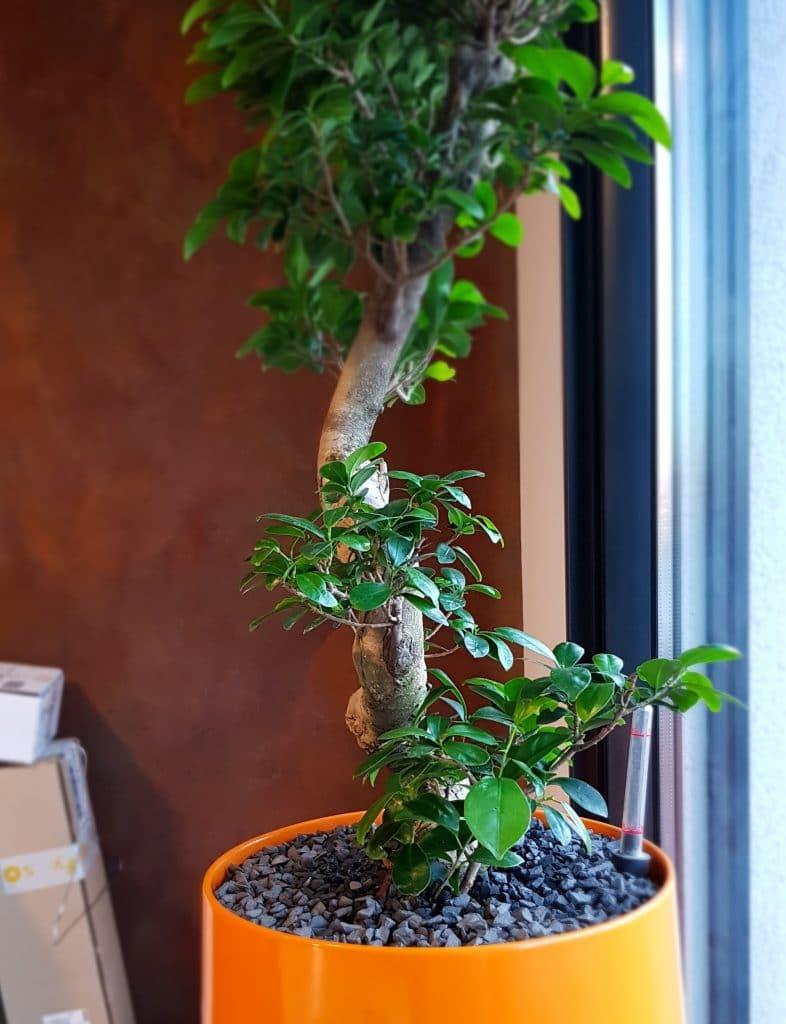 plante intérieure entreprise