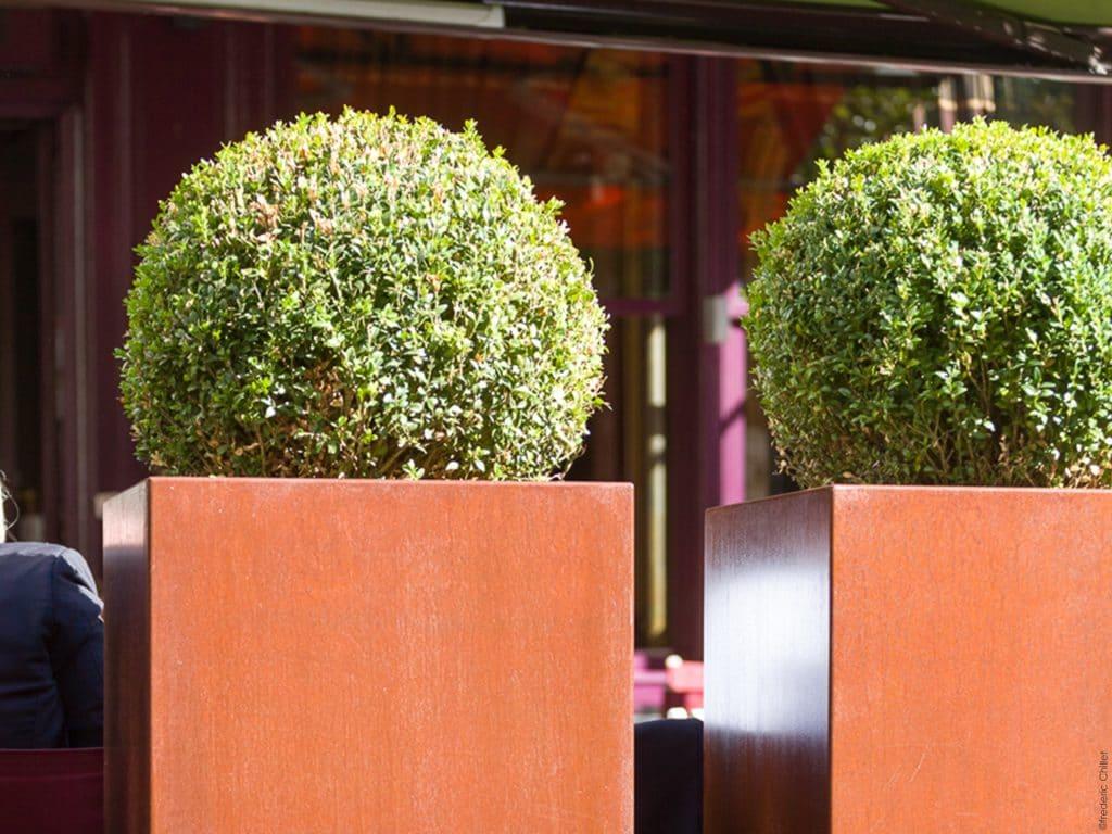 terrasse bar negociant lyon plante