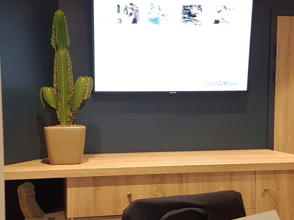 cactus en pot entreprise