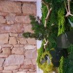 vegetaux stabilisés pour mur vegetal