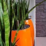 touche de couleur avec végétal bureau entreprise