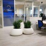 décoration végétale open space entreprise