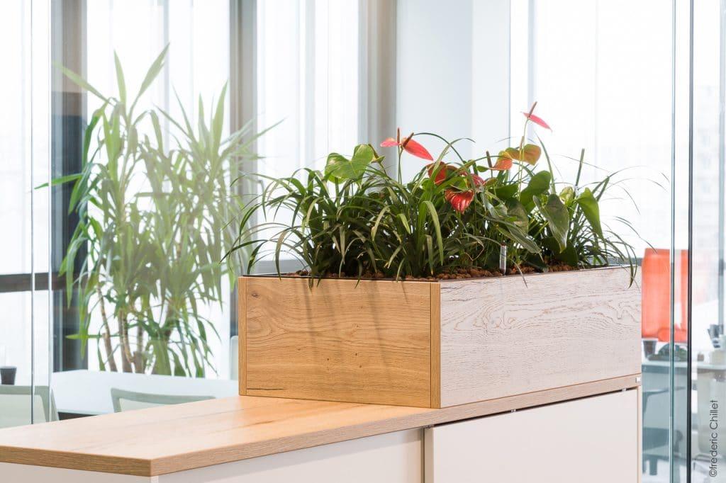 plantes verte en entreprise