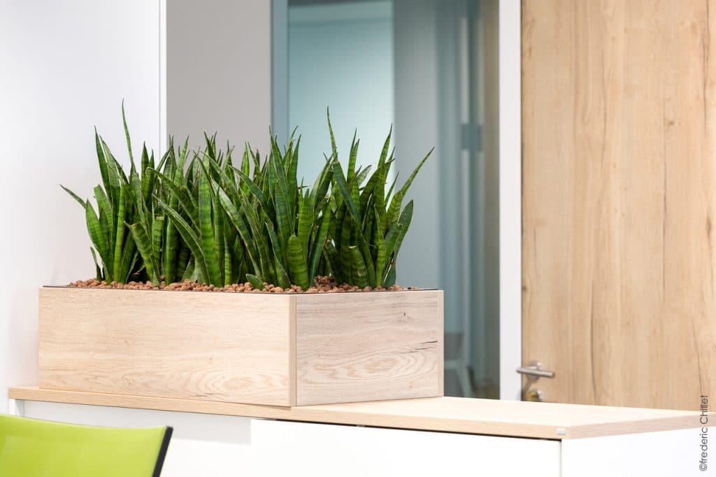 aménagement végétal de bureau