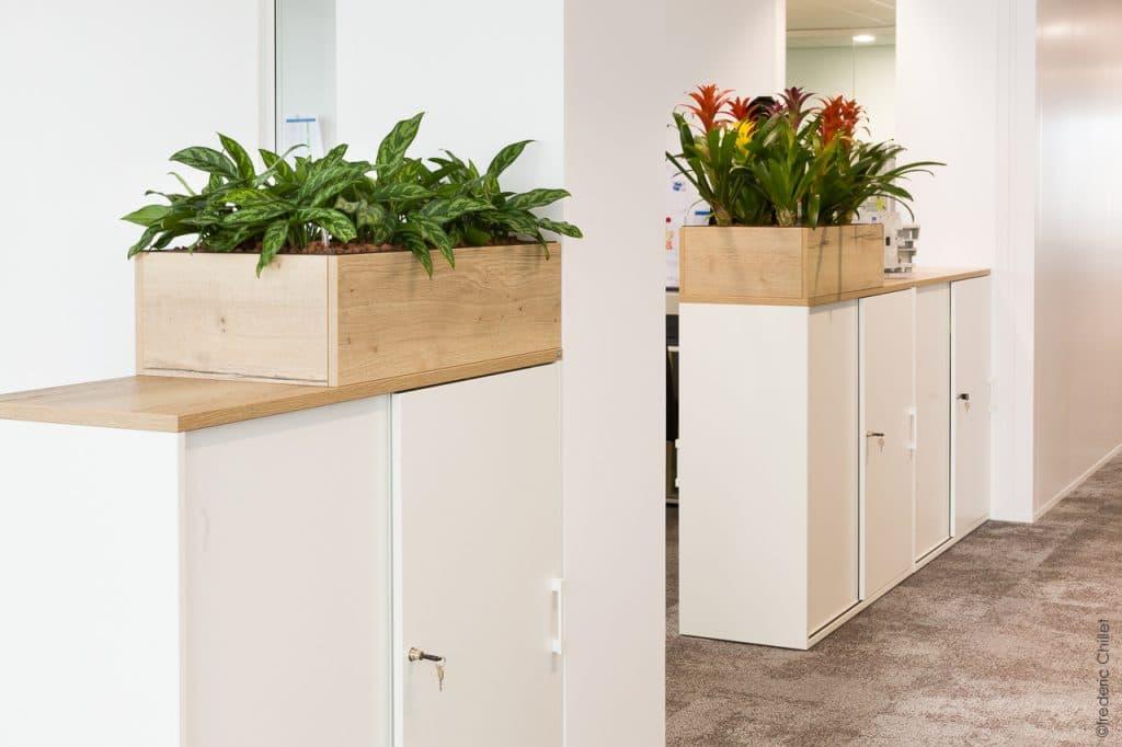 plantes vertes avec pot en bois entreprise