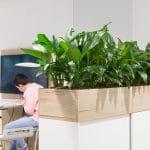 plante verte en entreprise