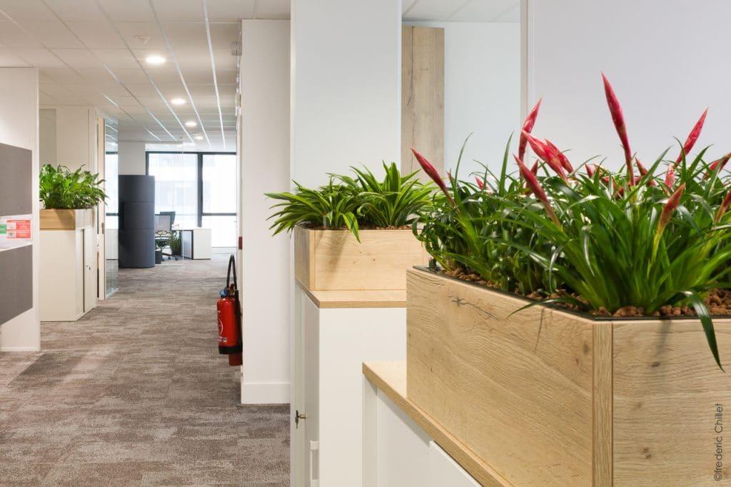 plantes vertes open space bureau entreprise