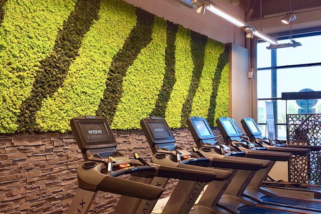 mur végétal décoration salle de sport