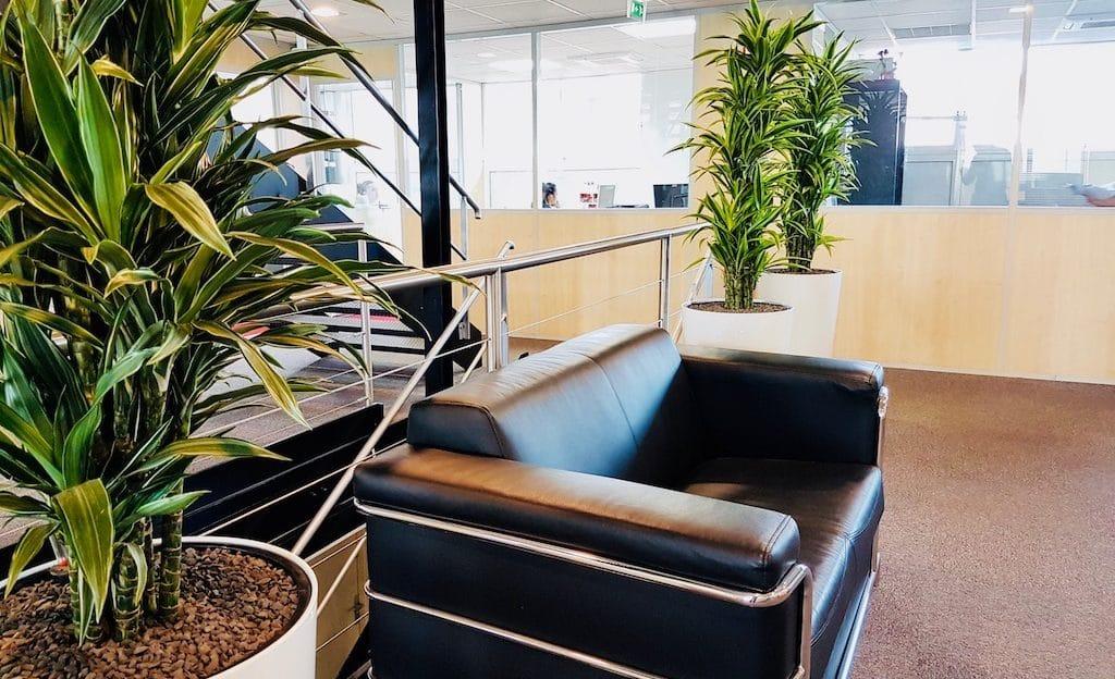 amenagement plantes vertes bureau entreprise