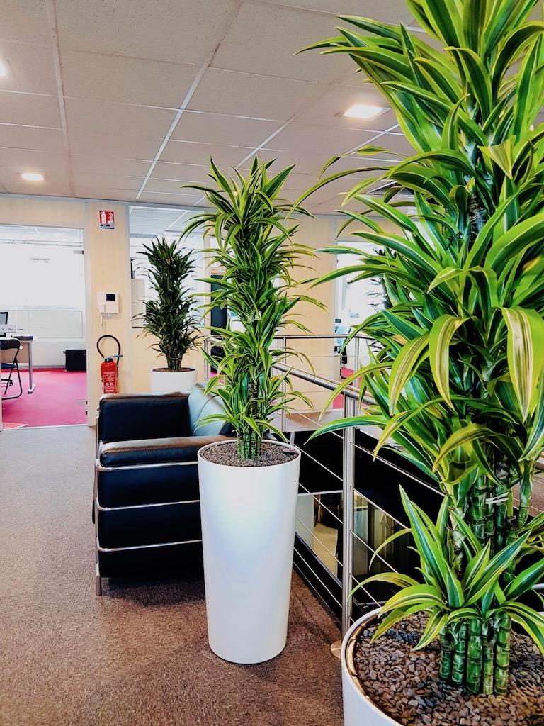 amenagement plante verte bureau entreprise