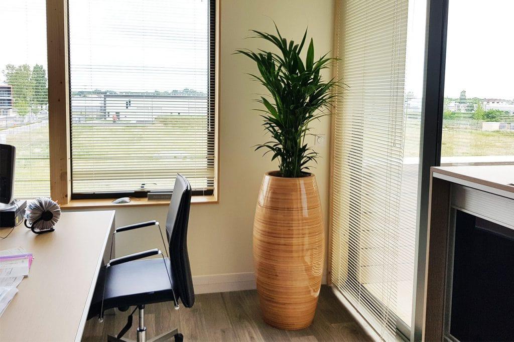 aménagement végétal pot en bois