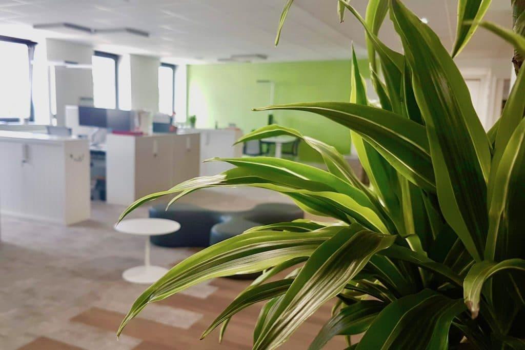 décor végétal en entreprise open space