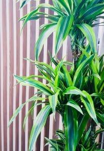 décor végétal en entreprise plante verte naturelle groupama clermont ferrand