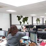 decoration vegetale open space entreprise