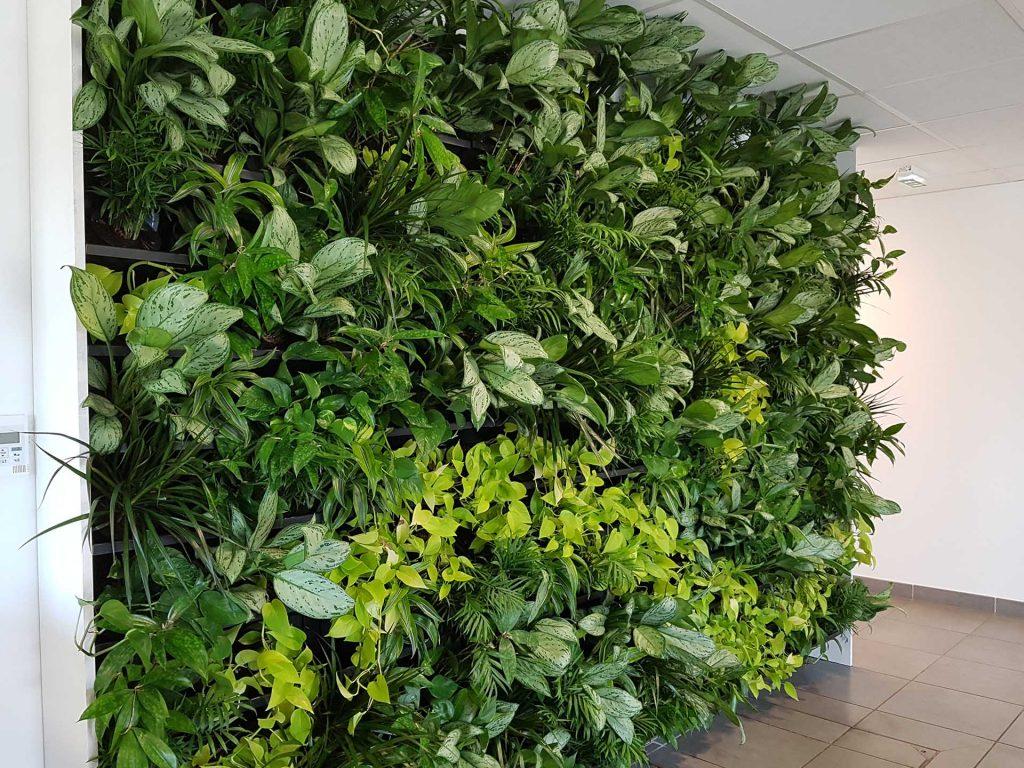 idée fabrication mur végétal