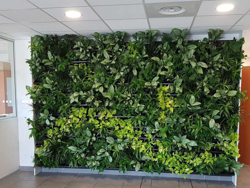 mur végétal accueil entreprise