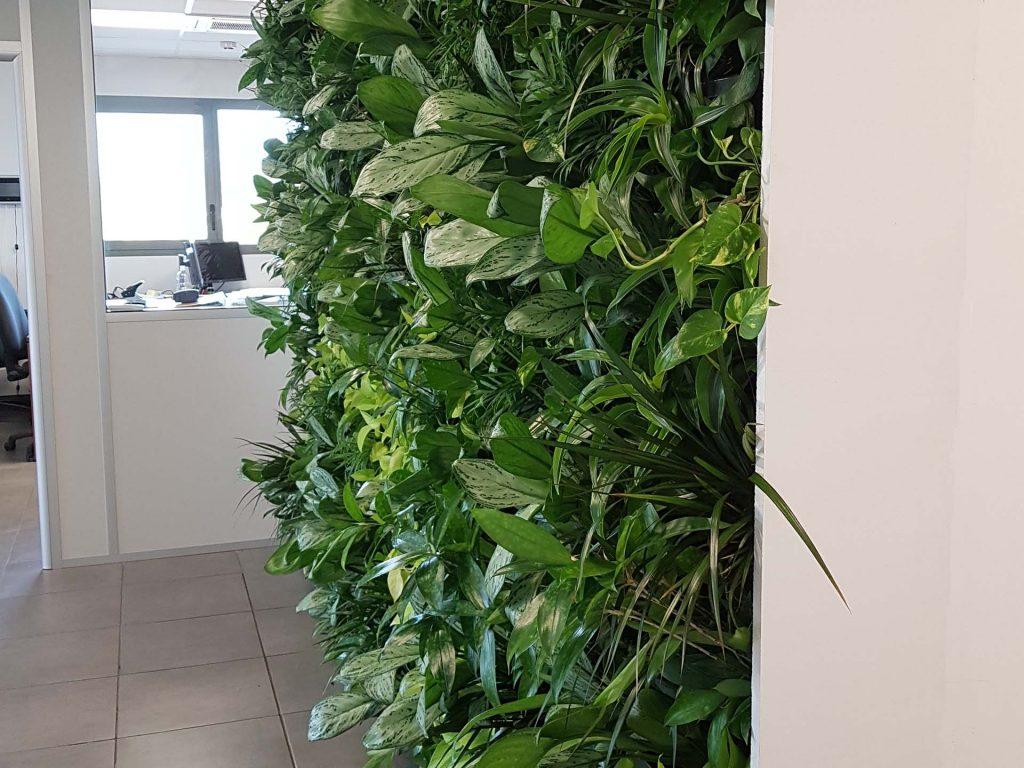 mur végétal naturel en entreprise