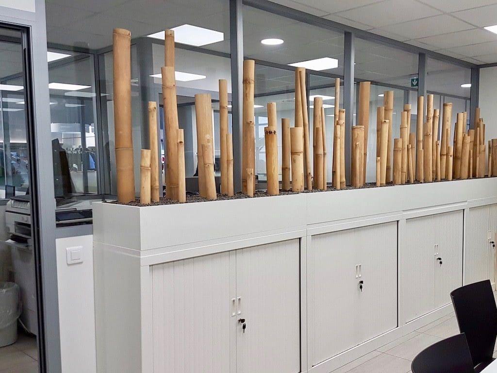 aménagement végétal intérieur bambou dans salle de reunion