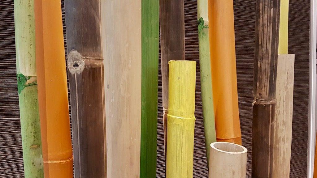 paysagiste décorateur intérieur à Lyon bambou coloré