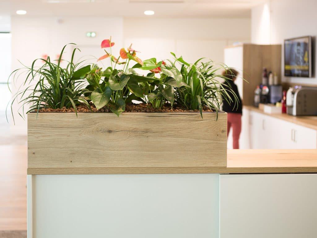 plante pour décoration bureau jardinière plante fleurie