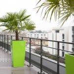 plante pour décoration bureau palmier sur une terrasse avec pot de couleur vert