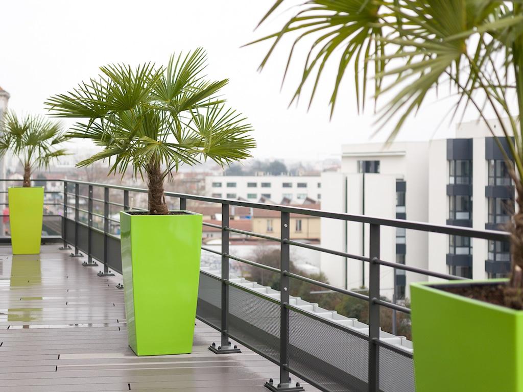 Des Plantes Pour La Decoration De Vos Bureaux Green Prospect