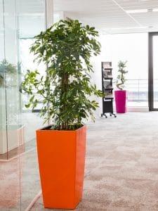 plante pour décoration bureau avec pot sur mesure rouge et fushia